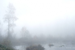 Fog over Lake