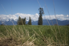 Chilliwack Fields and Mt. Cheam